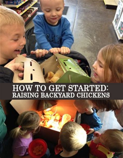getting started raising chickens