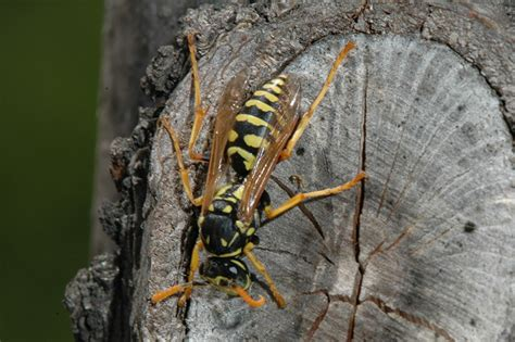 how to get rid of wasps in backyard bee deterrent for patio 28 images how to get rid of