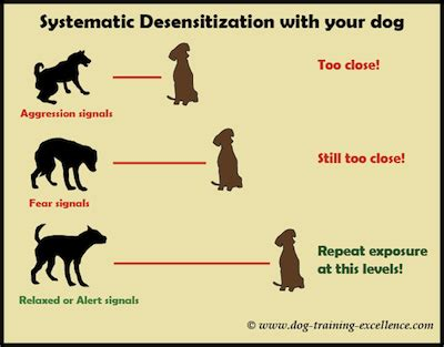 how to get your trained as a therapy systematic desensitization to get rid of fear in dogs