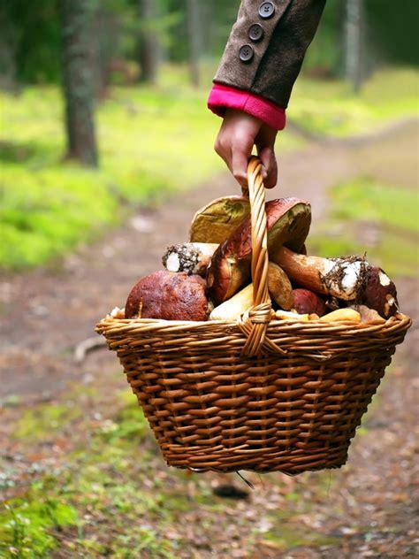 Pilze Im Eigenen Garten Züchten by Steinpilze Anbauen 187 Geht Das Auch Im Eigenen Garten