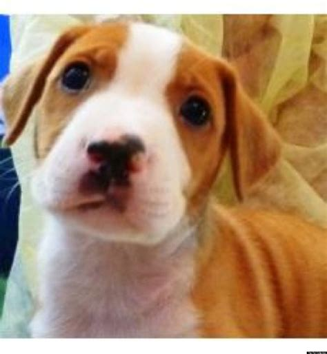 puppies for adoption in louisiana la puppy adoptions needed for baby of puppycam photos huffpost