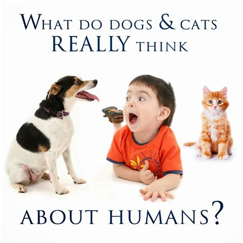 what does puppy what do dogs and cats really think about humans morris animal inn