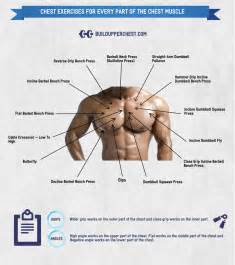 different bench press exercises chest exercises for every part of the chest