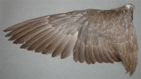 animal human art on pinterest sea dragon bird wings and