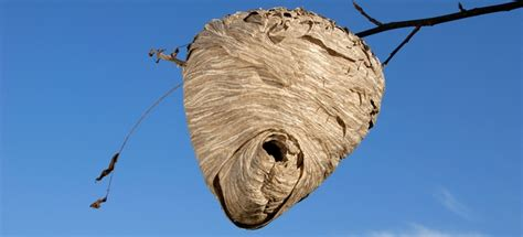 how to get rid of a beehive in your backyard how to safely get rid of a beehive doityourself com