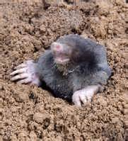 does the law allow you to kill moles pest control products