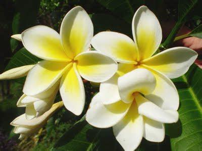 elenco fiori profumati elenco dei fiori pi 249 profumati mondo