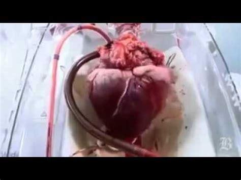 imagenes reales corazon humano fuertes imagenes corazon latiendo fuera de un cuerpo