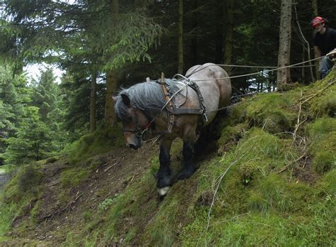 Home Design Courses Celtic Horse Logging Ecological Logging Sustainable