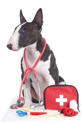 dogs aid the ultimate guide of aid for dogs 7 vital things you must
