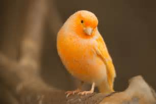 Canary by Doctors Are The Canaries In The Coal Mine Of Medicine