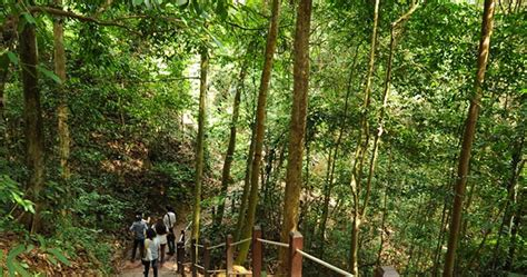 bukit timah nature reserve reopens today  restoration