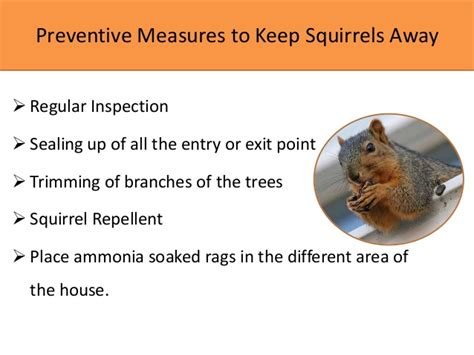 how to get rid of squirrels in attic