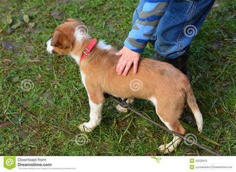 a puppy child pat a puppy stock photo image 42525876