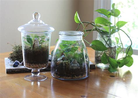 gardening   bottle  edible plants   grow