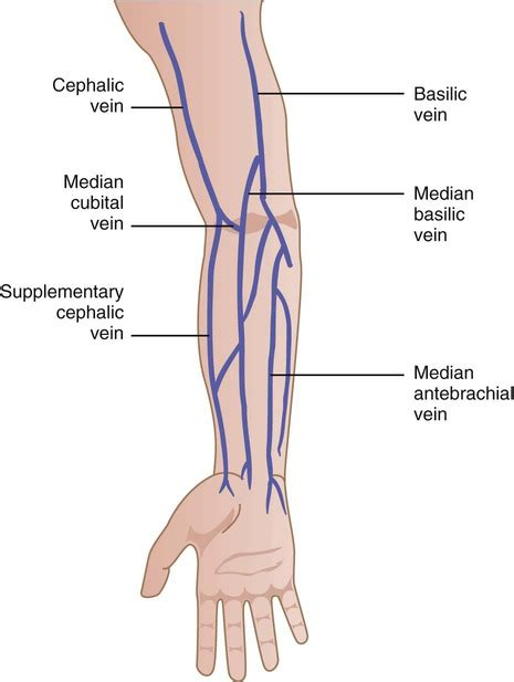 Veins Collapse When Drawing Blood
