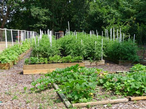 community vegetable garden