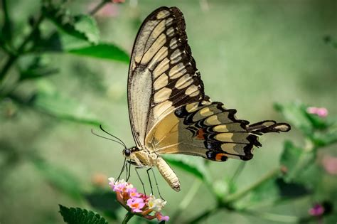 animals cool nature zoom macro wallpaper closeupbutterfly insects  wallpaper