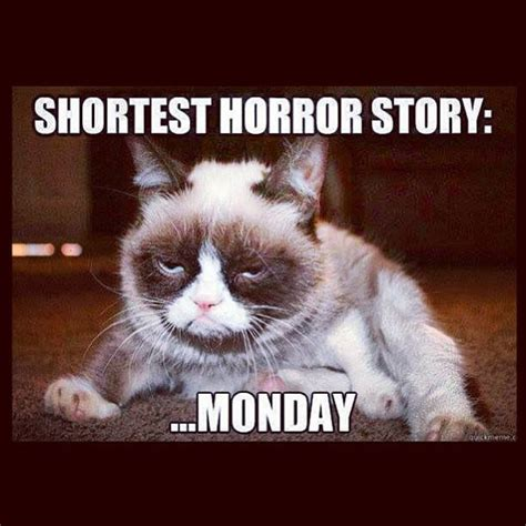 Grumpy Cat Monday Meme - monday jokes on pinterest jokes about work monday humor