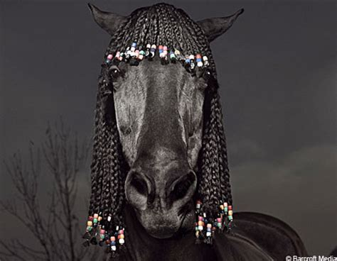hairstyles for horses the horse talker horse hairstyles
