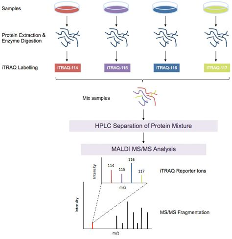 proteomics workflow look out for itraq proteomics analysis by creative