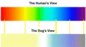 what colors do dogs see how do dogs see color