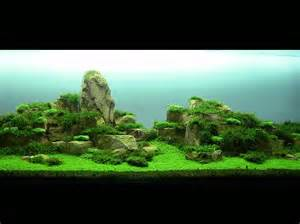Aquascape Contest Ushi Kouge Aquascaping Aga Aquascaping Contest 2010