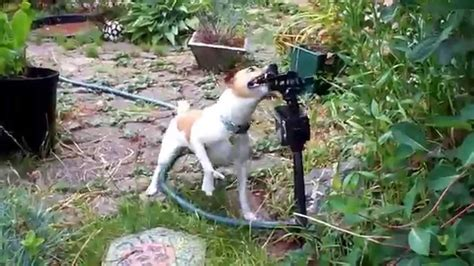 Bewegungsmelder Garten by Wasser Hundespielzeug Wassersprinkler Mit Bewegungsmelder