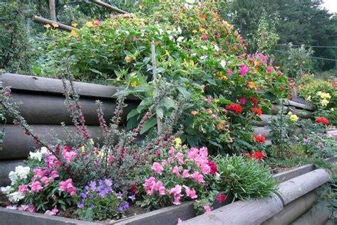 fiori da aiuola fiori da aiuole i fiori per le aiuole idee green fiori