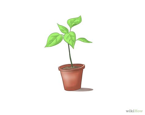 images of plants plant free download clip art free clip art on