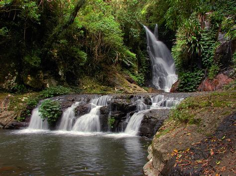 Finding In Australia Finding Adventure In Australia S Rainforests Lovely Travel Of A Nomadic