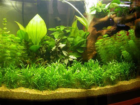 ghiaia acquario club acquariologico erpetologico barese le piante in
