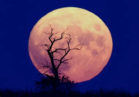 pink moon skywatchers will be able to enjoy the pink moon rising