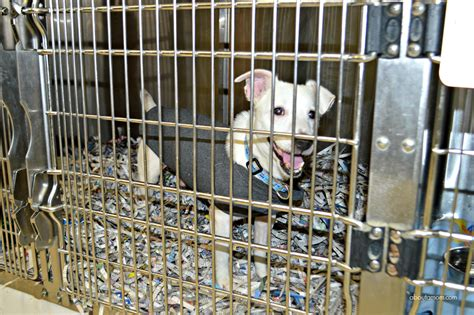 local pound 20 things to donate to your local animal shelter about a