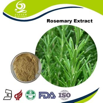 best quality food best quality food preservative rosemary seeds supplier with best price buy rosemary