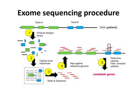 exome sequencing illumina exome sequencing images