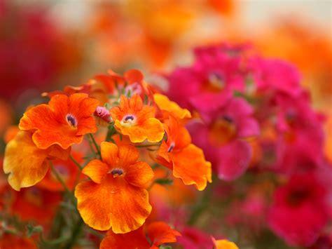 Orange Flowery orange flower hd wallpapers