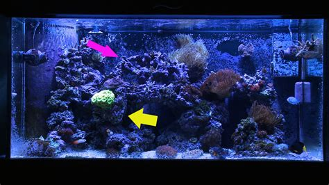 marine tank aquascaping why i involuntarily re did my aquascaping mr saltwater tank