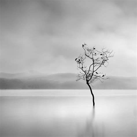 imagenes minimalistas naturaleza el fot 243 grafo minimalista george digalakis refleja el