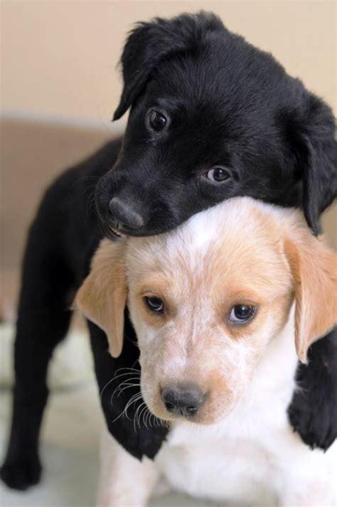 puppies hugging puppy hug