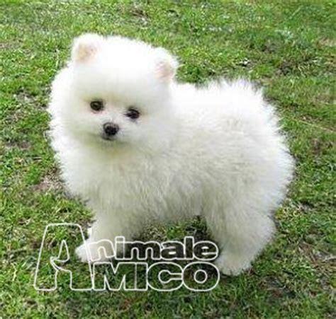 cani piccoli da appartamento in regalo cani piccoli in regalo regalo cani taglia piccola a