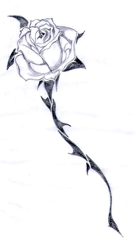 rose and thorn tattoos the gallery for gt roses with thorns sketch