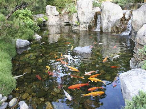 backyard koi pond designs sweeney feeders