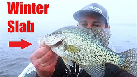 illinois   catching winter crappie   minnows