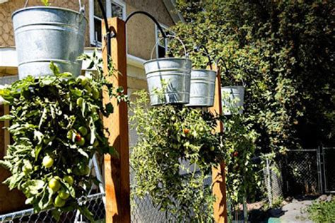 How To Make A Hanging Tomato Planter by A Taste Of The Earth Why Hang Tomatoes From