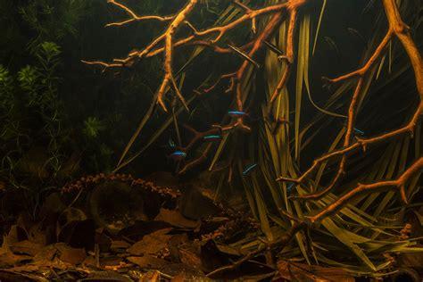 Aquascape Freshwater Aquarium Building A Biotope A Step By Step Rio Negro Aquarium