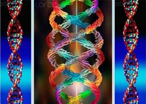 humanos con 3 cadenas de adn los marcadores conexi 211 n universal