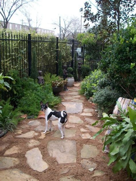Backyard Landscaping Ideas For Dogs by 25 Best Ideas About Friendly Backyard On