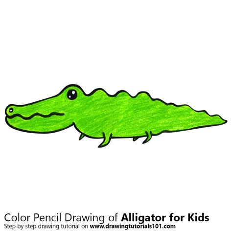 Easy Alligator Drawing