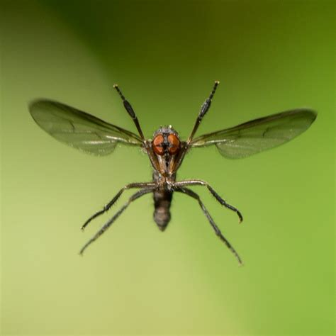 Backyard Fly Control How To Flying Insects